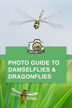 Tips and tricks to photograph damselflies and dragonflies. These amazing insects are perfect subjects for macro photos. Expert advice from Ross Hoddinott. Wildlife Photography Tips, Levitation Photography, Photography Basics, Photography Tips For Beginners, Photoshop Photography, Underwater Photography, Abstract Photography, Photography Tutorials, Beach Photography