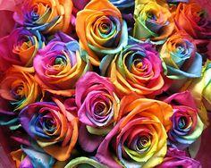Rainbow Flowers, Rainbow Colors, Rainbow Things, Rainbow Nails, Flower Pictures, Colorful Pictures, Flowers Pics, Tie Dye Roses, Rainbow Photo