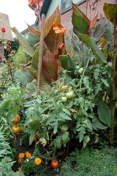 Success tips for your veggie garden