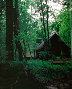 another house in the forest. japan of course.