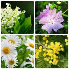 significato-dei-fiori-mughetto-malva-margherita-mimosa