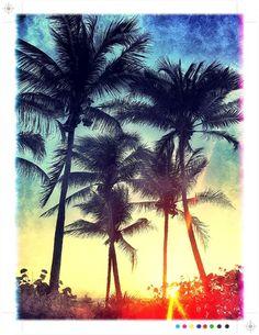 My backyard - Ft. Lauderdale Beach