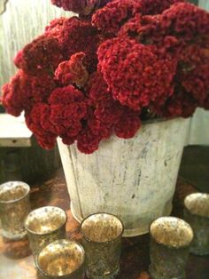 This Ivy House: Archive Red Flowers, Beautiful Flowers, French Christmas, Christmas Holiday, Terracota, Touch Of Gold, Shades Of Red, My Flower, The Fresh