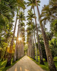 Rio de Janeiro Botanical Gardens: A beautiful place located at the foot of Corcovado Mountain. Shot by O L L I E   C O H E N