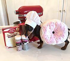 Necessary for baking: dressing up as baked goods Pet Halloween Costumes, Dog Costumes, Dog Halloween, Halloween Treats, Funny Dog Images, Dog Photo Contest, Dog Photos, Dog Treats, Dog Mom