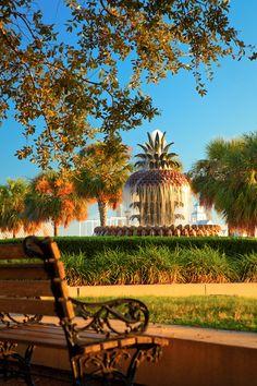 ~Pineapple Fountain, Waterfront Park, Charleston, South Carolina~  by Doug Hickok