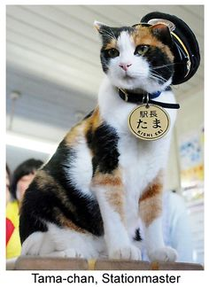 Station Master Calico Cat Tama Promoted to Corporate Executive I Love Cats, Crazy Cats, Cute Cats, Silly Cats, Cats And Kittens, Gato Calico, Calico Cats, Frontline Plus For Cats, Paint Your Pet