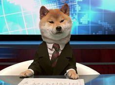 A este perro lo hacen contar noticias