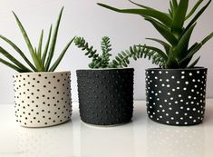 READY TO SHIP - Studded handmade ceramic succulent planter - small pottery planter - modern c. - READY TO SHIP – Studded handmade ceramic succulent planter – small pottery planter – modern c - Painted Plant Pots, Painted Flower Pots, Decorated Flower Pots, Diy Planters, Ceramic Planters, Cement Planters, Decoration Plante, Cement Crafts, Modern Ceramics