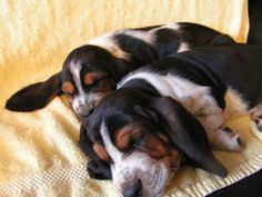 Freckles puppies