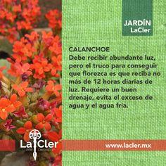 Tiene cuidados muy específicos, pero su llamativo color vale la pena, ¿tú qué opinas?   Fotografía de: http://cdn.givingplants.com/   #jardin #plantas #flores #hogar #green #garden #tips #homedecor