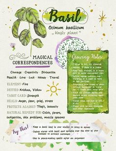 """themori-witch: """"tysmiha-witchnotes: """"Since I lack the actual artistic talent to physically make a pretty grimoire, I decided to start putting a digital one together! Here's the first entry 😊🌿 """" This is so beautiful! Magic Herbs, Herbal Magic, Plant Magic, Green Witchcraft, Witchcraft Herbs, Magick Spells, Witch Spell Book, Witch Herbs, Herbal Witch"""