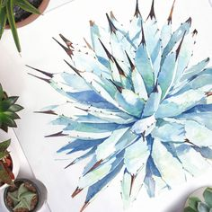 This cold weather has me feeling blue! Another view of my Agave macrocantha watercolor - available in the originals section of my website! #succulentsunday...