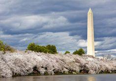 The Diverse Architecture of Washington, DC: The Washington Monument