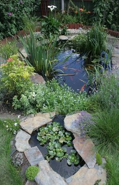 cute little pond