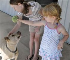 Teaching Bite Inhibition - Whole Dog Journal Article, by Pat Miller Newfoundland Puppies, Plott Hound, Positive Dog Training, Puppy Biting, German Dogs, Dog Safety, Norwegian Forest Cat, Pet Life, Animal Crafts