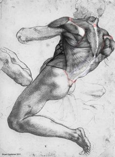 Ecorche drawings on Behance
