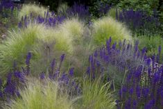 Idea for the front garden or the green area on the wall. Salvia & # Mainacht & # in Stipa tenuissima - All For Garden Prairie Planting, Prairie Garden, Garden Cottage, Contemporary Landscape, Landscape Design, Garden Design, Stipa, Border Plants, Gravel Garden