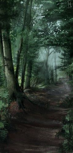 Mixed Forest Path – – Famous Last Words Forest Path, Deep Forest, Foggy Forest, Forest Trail, Forest Road, Magic Forest, Landscape Photography, Nature Photography, Photography Tips