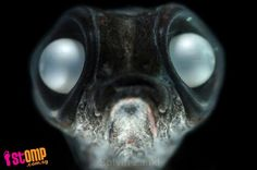 STOMP - Singapore Seen - Aliens on earth: More photos of bizarre deep sea creatures you didn't know existed