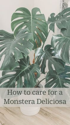 Indoor Tropical Plants, Outdoor Plants, Potted Plants, Garden Plants, Large Indoor Plants, Hoya Plants, Leafy Plants, Big Plants, Types Of Plants