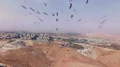 Storks fly in thermals on the way south to Afrika after several days of heavy haze that existed over all the countries in the region To use this video in a c. Stork, Aerial Photography, Country, Israel, Watch, Usa, Beauty, Clock, Rural Area