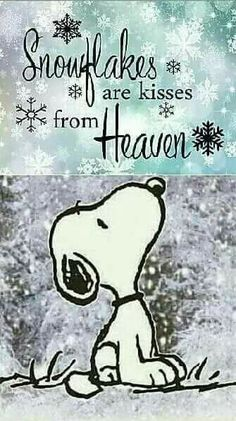 Snowflakes are kisses from Heaven ❄