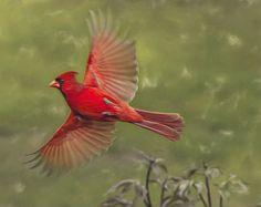Bird Photography bird artwork cardinal female cardinal by lmlphoto