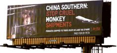 """Victory! China Southern Airlines Ends Shipments of Primates to Labs - """"Today is a day for celebration! A senior official from China Southern Airlines (CSA) has just sent an e-mail to PETA announcing that the airline will immediately """"stop transporting live primates for laboratory experiments on all flights."""""""