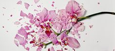 """Flowers Soaked in Liquid Nitrogen Shattered Into Pieces """"Broken Flowers""""- Not sure why, but I kind of love this..."""