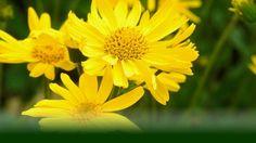 Body-Aromatherapie|LIFETOWER Body, Plants, Health, Flora, Plant, Planting