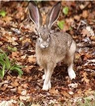 How to Keep Rabbits And Other Animals Out Of Your Garden  Humanely, Organically, Frugally,  Sustainably