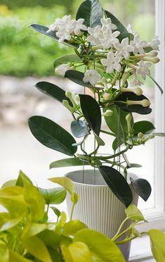 De tio bästa blommande krukväxterna för nybörjare | Wexthuset House Plants Indoor, Indoor Plants, Plants, Indoor