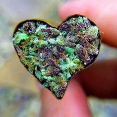Plant Heart Valentine Picture, Valentine Pics, Weed Strains, Purple Punch, Magick, Bud, Psychedelic, Cannabis, Backgrounds