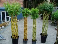 See related links to what you are looking for. Lotus Garden, Dream Garden, Garden Art, Garden Design, Topiary Garden, Topiary Trees, Living Willow, Garden Solutions, Willow Weaving