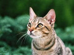Kittens Meowing: Best Compilation The Most Beautiful and Fun Pets ! ?  https://www.youtube.com/watch?v=yNBk22m1gYY&list=PLC_HjotBFMpOoi_SKE7HoU9skczRCv8aM   YOUTUBE CHANNEL SUBSCRIBE: http://www.youtube.com/user/TheFederic777?sub_confirmation=1  FACEBOOK:  https://www.facebook.com/KittensLoveForever/  PINTEREST: http://es.pinterest.com/fredalb/  BLOG:  http://look-how-cute-kittens-2.blogspot.com/  BLOG:  http://make-dogs-be-happy.blogspot.com/    #Kittens #Cat #Gato #Animal #Pet #Mascota