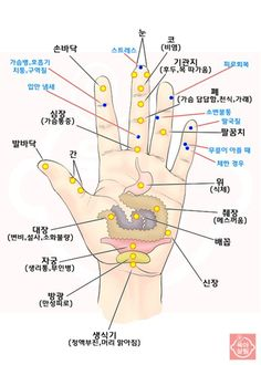 Pin by Yoon Hee Kang on hand acu. Acupressure, Acupuncture, Yoga Fitness, Health Fitness, Cat Exercise, Medical Anatomy, Muscle Anatomy, Alternative Therapies, Interesting Information