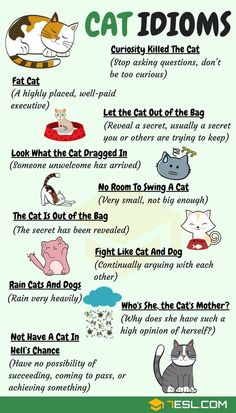 CAT Idioms: 30 Useful Cat Idioms & Sayings in English Cat Idioms & Cat Sayings! Learn common cat idioms, phrases and sayings in English with meaning, ESL printable worksheets and example sentences. English Vocabulary Words, Learn English Words, English Phrases, Sayings In English, English Vinglish, English Study, English Grammar, English Food, English Language Learning