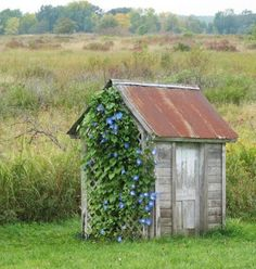 Owatonna, Minnesota outhouse.  Love the morning glories.