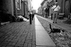 A Cat Crossing Elfreth's Alley by Henderson Street, via 500px