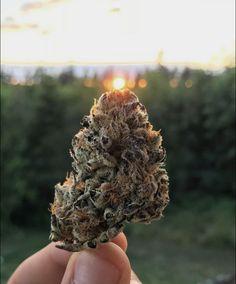 $800 available in stock Weed Shop, Hemp Oil, Cannabis, Seeds, Bud, Ganja, Gem, Eyes