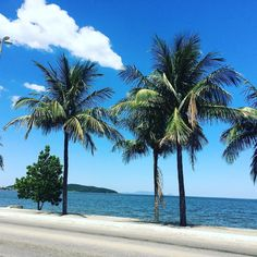 Blue skies 77 degrees and palm treesIm living the dream. Still I could go for a nap or a cup of coffee as large as my bathtub. Jarod Kintz Xazaqazax  #blueskies #coffee #cupofcoffee #dream #humor #nap #palmtree #palmtrees #sky #sleepingbeauty #bluesky #brasil #brazil #brasile #spiaggia #primavera #mare #oceano #adventure #relax #relaxing #melevatrip #us #noi #amore #palme #nuvolA #cloud #inspire
