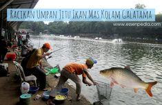 9 Linsfy Ideas Essen Fish Wangi