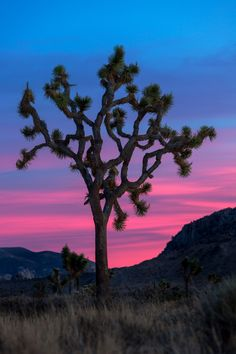 Joshua Tree sunset - Joshua Trees are these beautiful trees which you can find in the Joshua Tree National Park. It was the last national park we visited and I'm happy we decided to go!