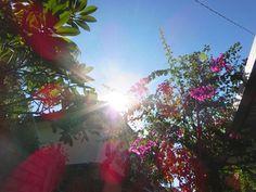 4/23(土)晴れ 温度29.0℃、湿度66%。 朝からギラギラの太陽が昇ってきました。 セミも元気に大合唱中~♪