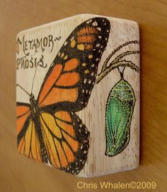 #pyrography #woodburning #wood #butterfly