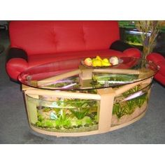 Oval Coffee Table Aquarium with filter, pump, light, heater, completely fish ready