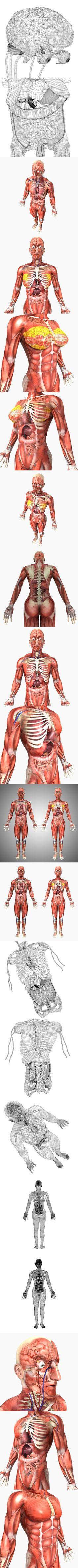 Activity 1 – Male or Female?   Anatomy & Physiology   Pinterest