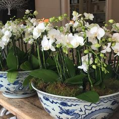Blue and white bowls are always such a classic, timeless look!! @chrissy_and_co @chrissyandco1 seen in some of the most beautiful homes in The Eastern suburbs @virginiaswanson @christine.parker_ #homeporn #homewares #gotheblues #shopthelookatchrissyandco #visualbeauty #woollahra #hamptons #palmbeachsydney #bondi #avalonsydney #beautifulhome #bellemagazine #beautifulliving #bellevuehill #entertaining #entertaininginstyle #newshipment #interiorsbychrissy #lampsbychrissy #cushionsbychrissy 😘😘