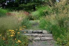 23_steps_and_grasses